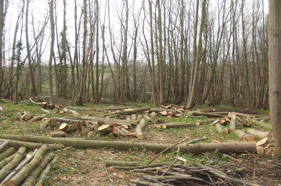 Chestnut Coppice
